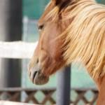 葵祭で下鴨神社の走馬の儀を見る。上賀茂も?時間は?