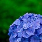 梅雨を英語で説明、中休みや梅雨明けの例文