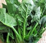 家庭菜園ほうれん草の収穫時期。保存方法で長持ち冷凍も生のまま?