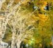 丸の内イルミネーション街路樹コース