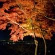 名古屋東山公園の紅葉ライトアップ