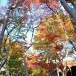 名古屋近郊の紅葉スポットと愛知の名所厳選!見ごろはいつ?