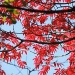 東京から日帰りドライブ紅葉デート・東京近郊でライトアップなら?