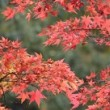 高尾山紅葉ハイキング11月服装