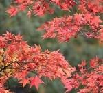 高尾山の紅葉狩り時期は今!ハイキングの服装11月と持ち物リスト