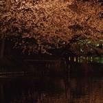 夜桜東京デート。都内で遅くまでライトアップしてる深夜の穴場情報