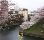 千鳥ケ淵公園お花見の場所取りマニュアル。混雑状況と駐車場も必見!